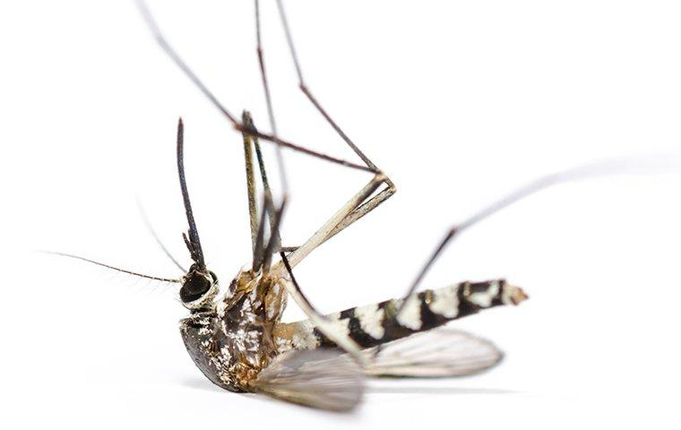 mosquito control company in Lake Charles